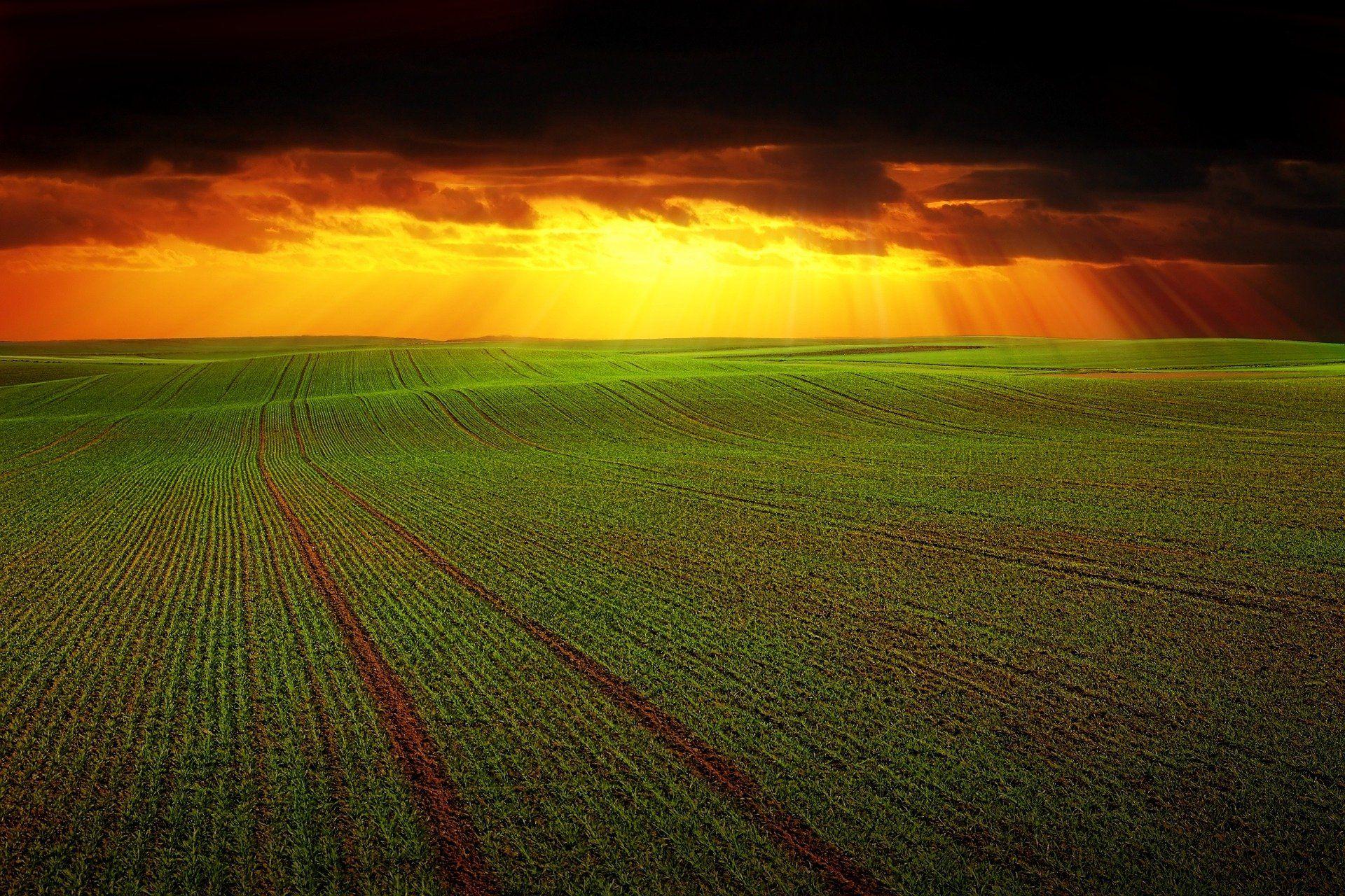 Devolución gasóleo agrícola 2.020.